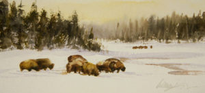 Bison Forage
